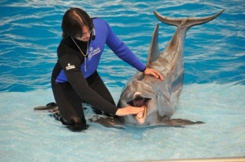 dolphin upclose (son's photo)