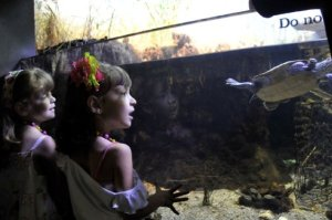 gazing at aquarium