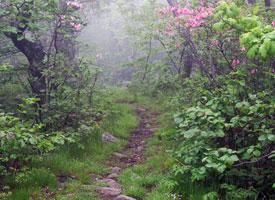 appalachian-trail-