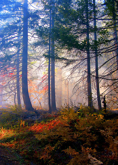 autumn fire and mist  diane shuster
