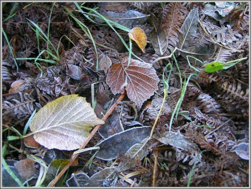autumn frost  http://www.trekearth.com/members/ternic/