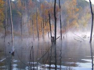fen marsh