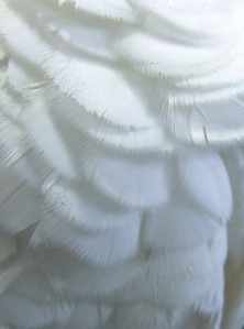 Texture  feathers.  Macro.
