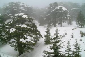 syrian snow scene