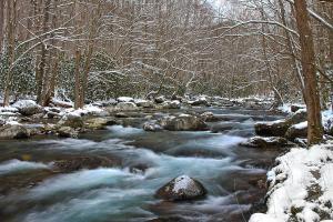 mountain-stream-shari-jardina