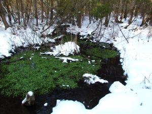 mountain stream watercress