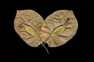 leaf print photo