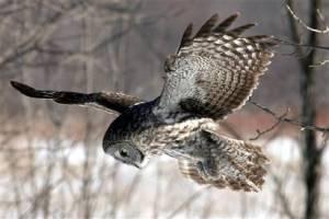 owl field