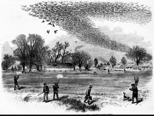 Shooting Wild Pigeons (1875). Louisiana Digital Library-1200-990x749