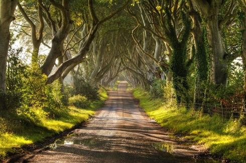 amazing-trees-dark hedges game of thrones ireland