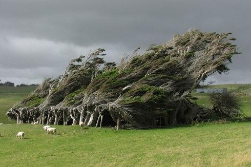 amazing-trees-new zealand jpg