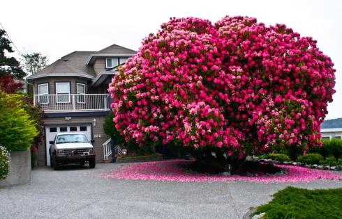 amazing-trees-rhodo