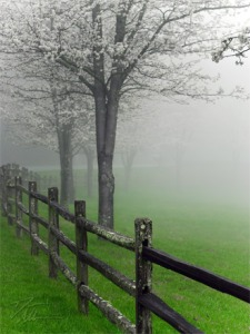 mistytreeladaveallen